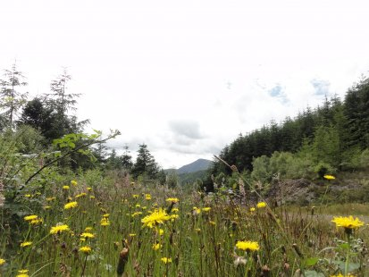 siabod-walks-photos-15th-july-2012-008